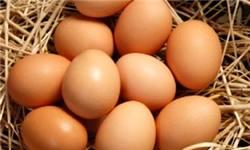 نامه نمایندگان به رئیس جمهور در اعتراض به گرانی «تخممرغ»