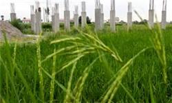 سرمایه صندوقهای حمایت از توسعه کشاورزی افزایش مییابد