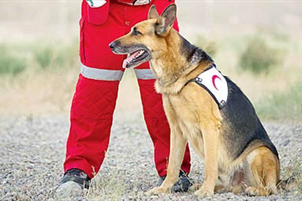 استفاده از سگ های تجسس در انفجار گاز در زنجان