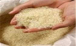 هیچ برنج آلودهای از گمرک ترخیص نشده است/ موضوع برنج اروگوئه مربوط به تفاوت استانداردها است