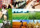 ۳۵۰ میلیارد تومان برای ایجاد اشتغال پایدار در روستاهای مازندران اختصاص یافت