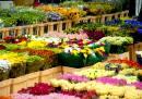 مازندران رتبه نخست تولید گل و گیاه کشور را دارد