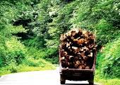 با اجرای طرح تنفس جنگل/ نفس صنایع چوب مازندران به شماره افتاد