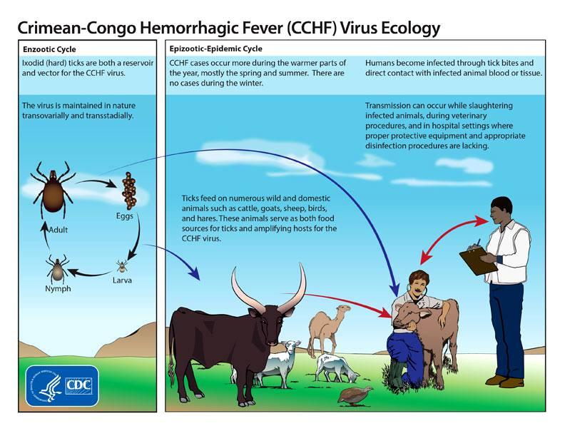 روشهای پیشگیری از بیماری تب کریمه کنگو