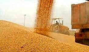 انبار بورسی نیاز اولیه گندم برای ورود به بورس کالا است/ قیمت تضمینی هزینههای دولت را کاهش میدهد