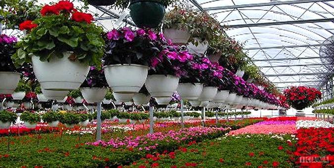 تعاونی های گل و گیاه 11 هزار شغل ایجاد کردند