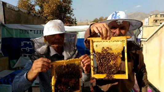 پرورش زنبور و تولید عسل ارگانیک در پشت بام خانه در کرج