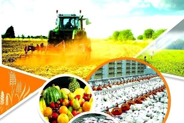 افتتاح 3511 پروژه بخش کشاورزی در دهه فجر امسال/ توسعه آبزی پروری به شیوه پرورش در قفس