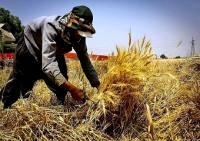 فرصت طلایی برای تولید و اشتغال روستایی
