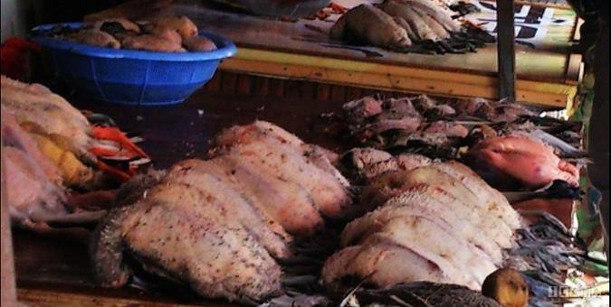 شکار غیرمجاز در فریدونکنار امنیت اجتماعی را خدشه کرده است