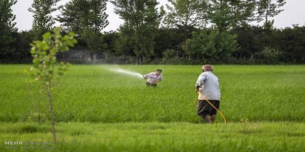 ضرب الاجل استانداری بر برگشت سریع کشاورزی سیلزده مازندران به تولید