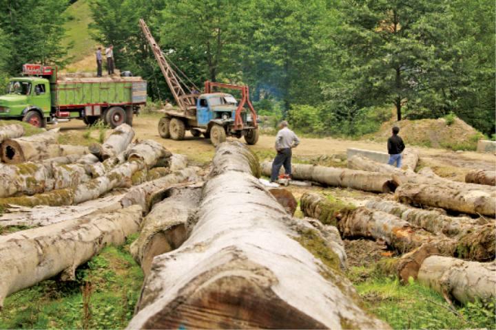 مخالفت برخی از نمایندگان مجلس با طرح تنفس جنگل