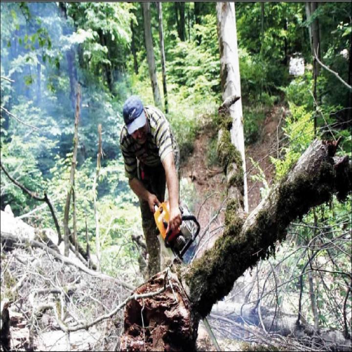 سلطان جنگل کیست؟ / قوه قضائیه نسبت به شایعات جنگل خواری خواص شفاف سازی کند